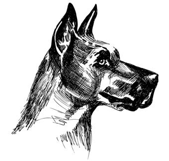 jeanne-louise-dessins-chien