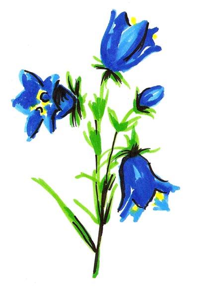 jeanne-louise-dessins-fleurebleu