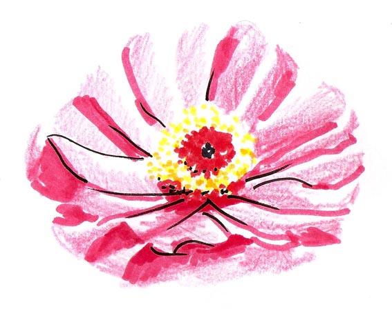 jeanne-louise-dessins-fleurerose