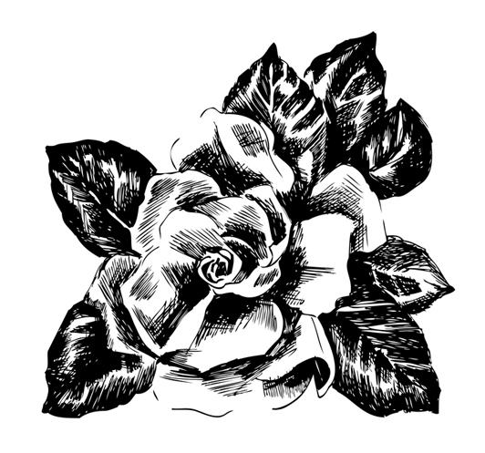 jeanne-louise-dessins-rose