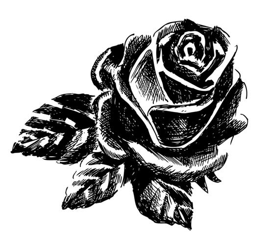 jeanne-louise-dessins-rose2